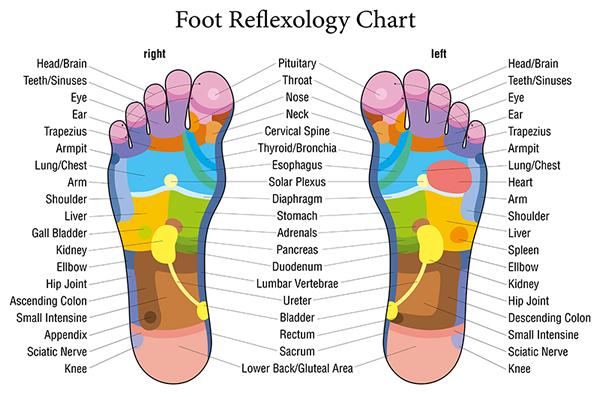 reflexology_chart
